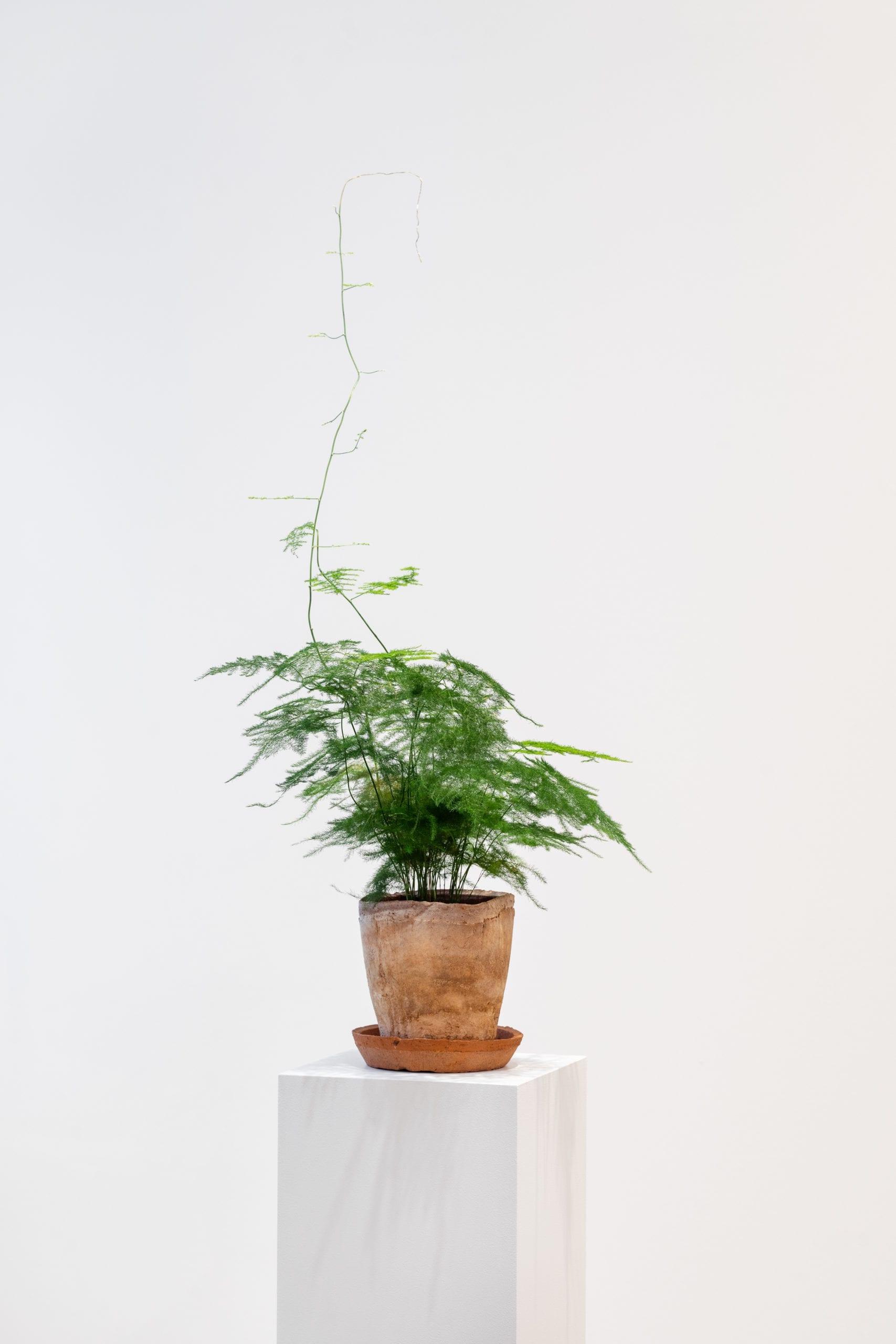 Gabriel - Die Pflanze homo absconditus